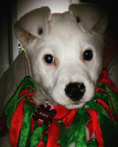 christmas blanca
