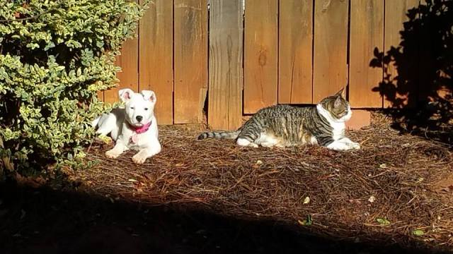 sharing the sunny patch