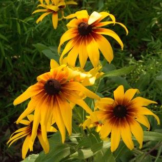 hampton garden flowers 2