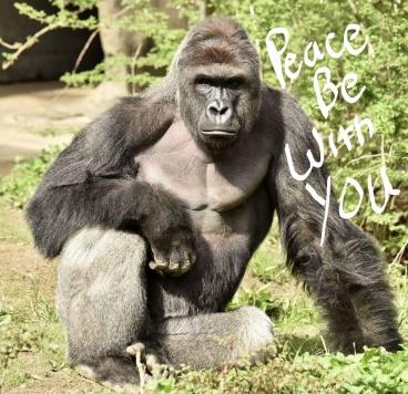 gorilla la times_LI